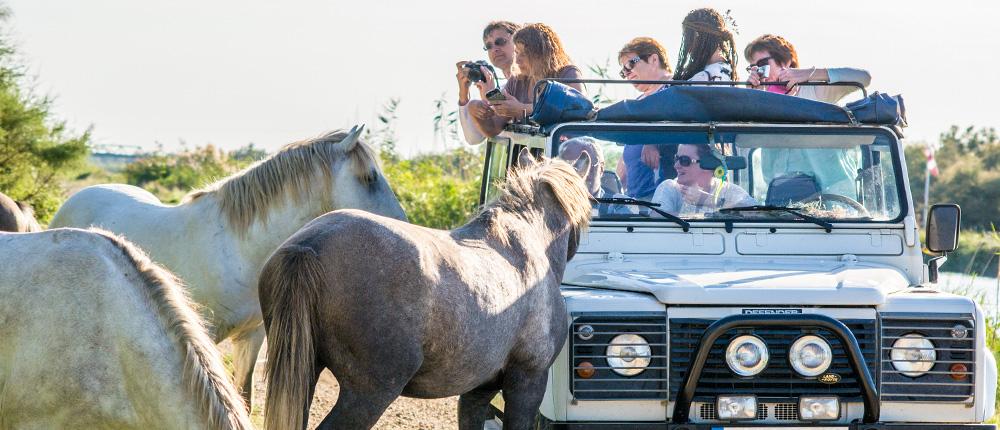 pierrot-camarguais-chevaux-camargue